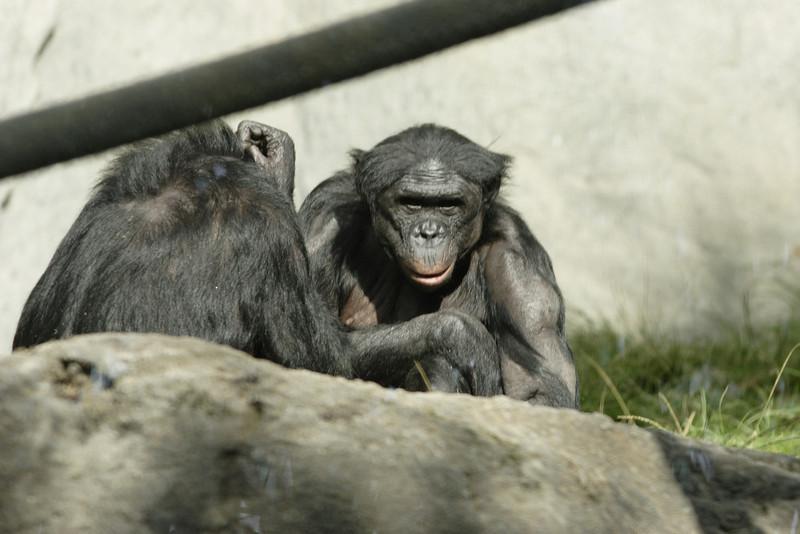 San Diego Zoo 012006_025