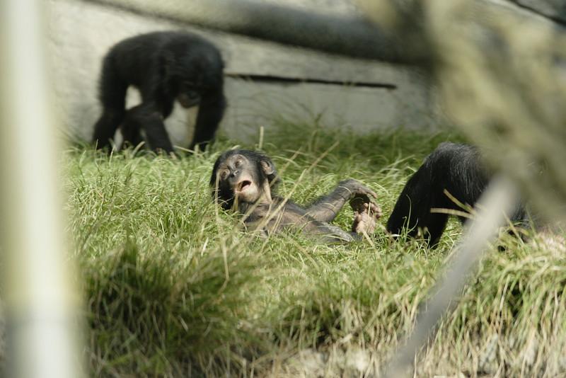 San Diego Zoo 012006_026