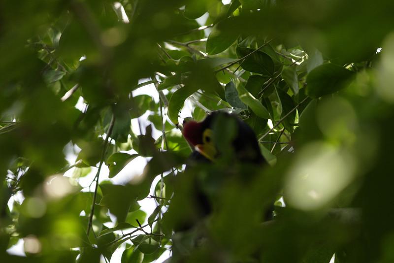 San Diego Zoo 012006_019