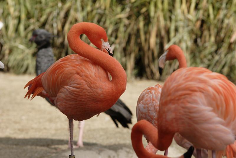 San Diego Zoo 012006_007