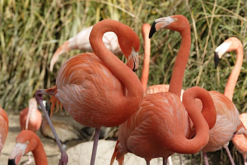 San Diego Zoo 012006_006