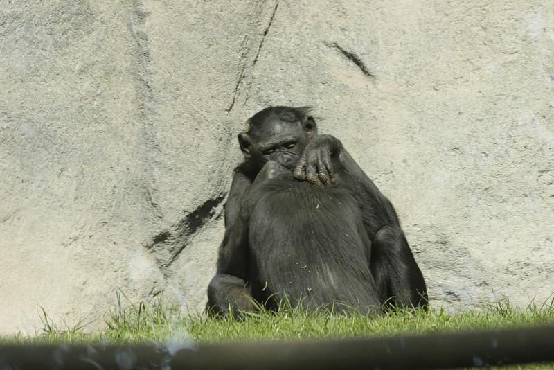 San Diego Zoo 012006_024