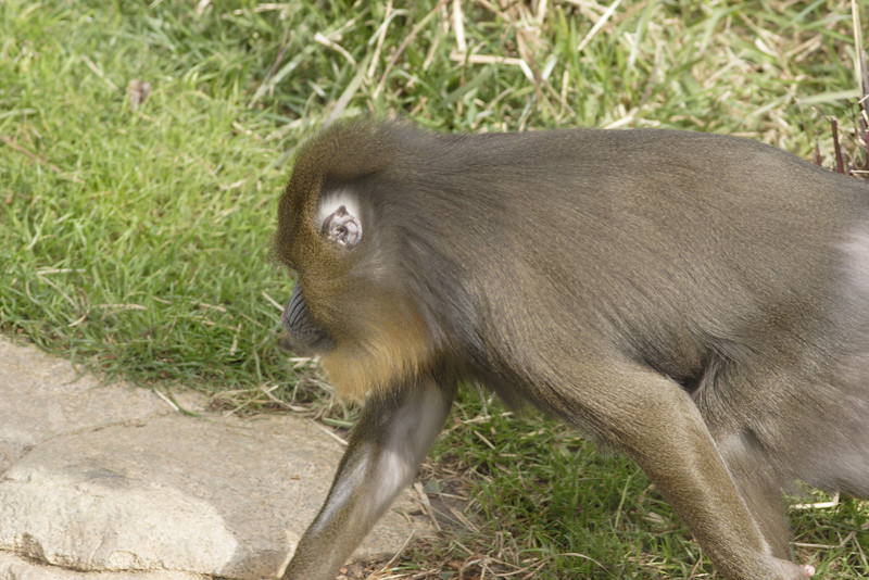 San Diego Zoo 012006_013