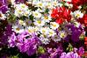 Flowers outside of restaurant in Stinson Beach, CA