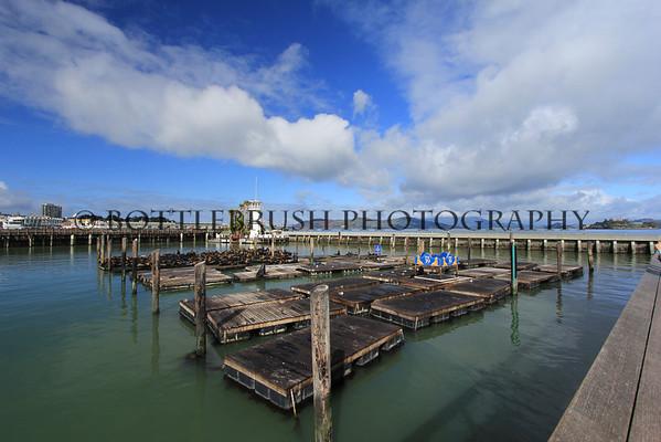 San Francisco's Pier 39 Sea Lion Colony.