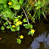 Flowers near pond in Japanese Garden in Golden Gate Park in San Francisco