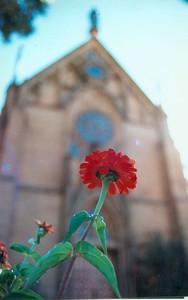 flowerandchurch
