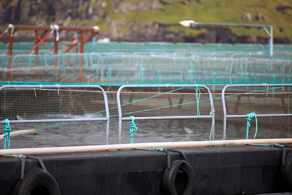 Sustainable fisheries.  Holding tanks right in the water ensure the salmon, trout, or other edible fish will be able to grown and restock the fished out population.