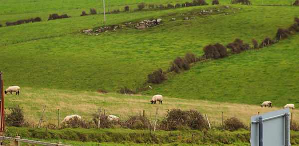 Sheep outnumber residents 9:1.