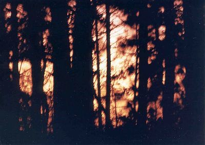 Sunset through trees, May of 1993, Taken with Canon T70, Kodak film, Scanned from print