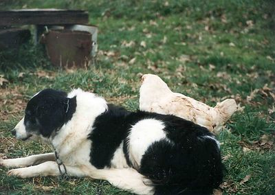 Hot Dog and her pet chicken, Jan 1993, Taken with Canon T70, Kodak film, Scanned from print