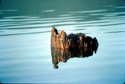 Stump on Flathead lake, Montana, October 1992, Taken with Canon T70, Kodachrome 64 slide film, Scanned from slide , Taken on Montana trip 1992