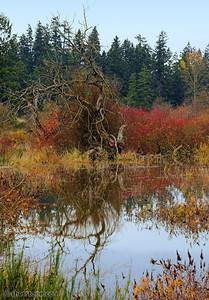 Marsh Tangle