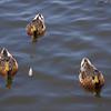 Balboa_Lake_071308_34