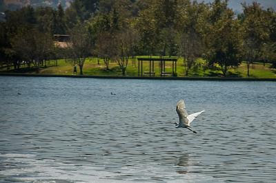 Balboa_Lake_072908_00