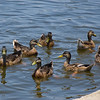 Balboa_Lake_071308_01