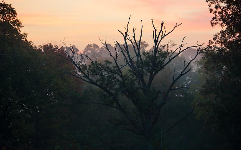 Moody Fall Morning