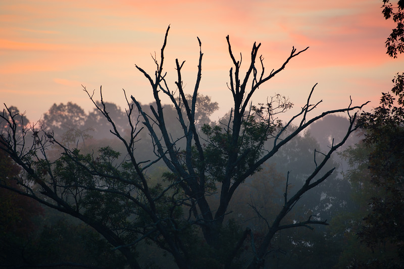 Moody Fall Morning 2