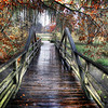 Morton Arboretum - Lisle, IL