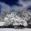 Forest Preserve, Oak Park, IL