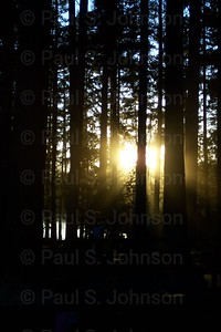 Sunset_through_Trees