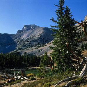 North America, USA, Wheeler Peak, Great Basin NP, Nevada