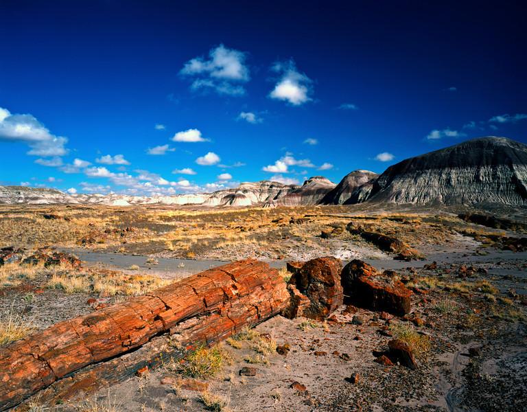 Nobody, North America, USA, Arizona, Petrified Forest National Park, Long Petrified Log at Blue Mesa