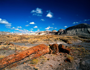 Nobody, North America, USA, Arizona, Petrified Forest National Park, Long Petrified Log at Blue Mesa