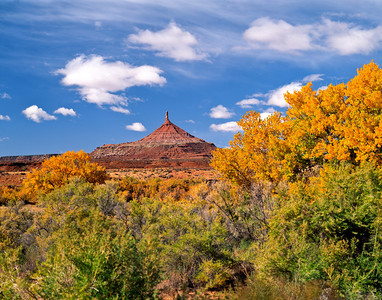 Nobody, North America, USA, Utah, near Canyonlands National Park on Bureau of Land Management Land, North Six Shooter Peak framed with Yellow Fall Cottonwoods