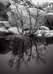 """Cottonwood Reflection"""