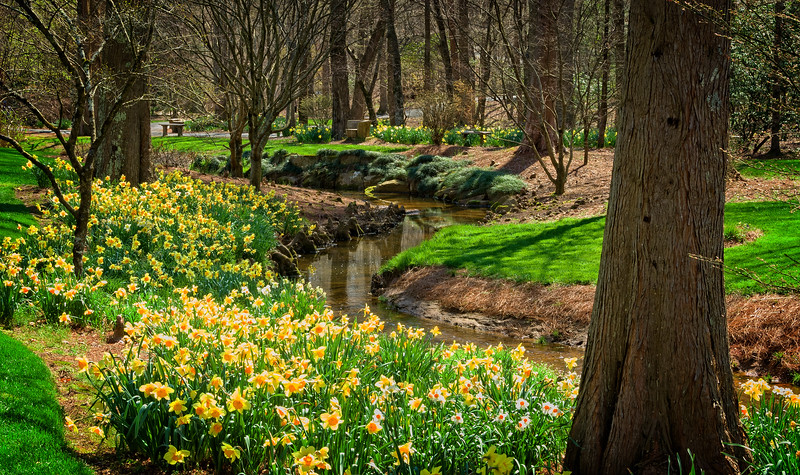 """""""Daffodils by the Brook"""""""