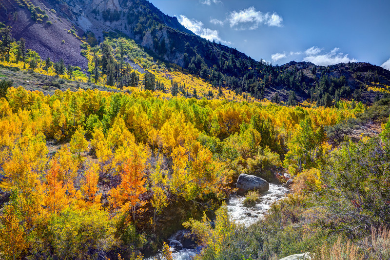 5D 0319 Photomatrix HDR Image of Aspens near South Lake West of Bishop, CA