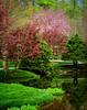 """Quiet Pond in the Springtime"""