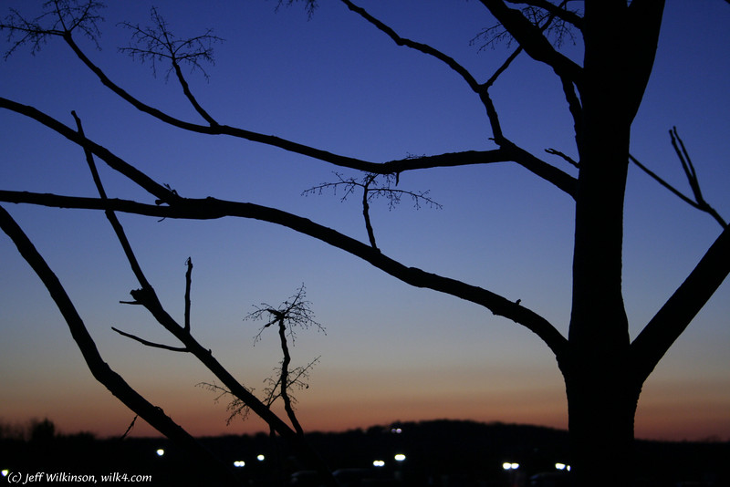 #3246 blue sunset silhouetting branches