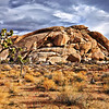 Joshua Tree NP rock. A break in the clouds made the morning light very intense.