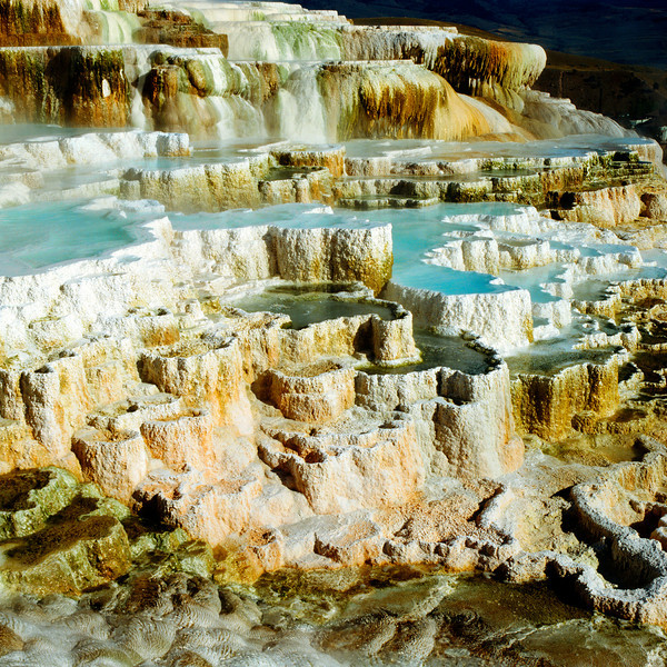 North America, USA, Wyoming, Yellowstone N. P., Mammoth Hot Springs, Minerva Terrace