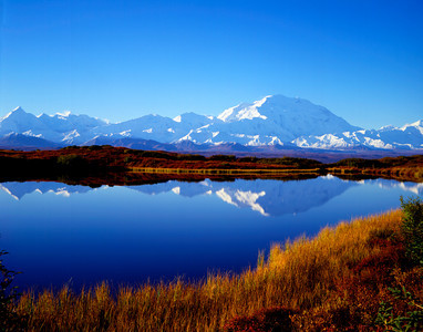 Denali across reflecting pond with fall colors V