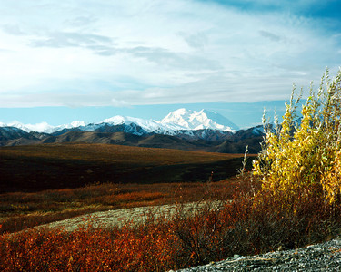 Denali from Primrose Ridge