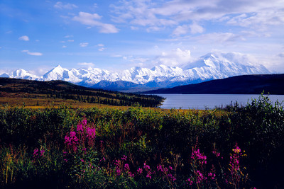 Denali, Fire Weed and Wonder Lake in the Fall