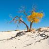 North America, USA, New Mexico, Alamagordo, White Sands National Monument