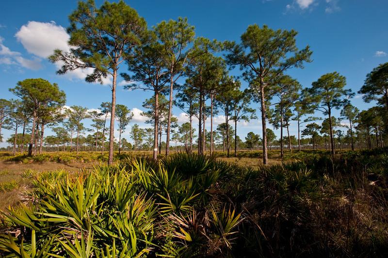 Babcock/Webb Wildlife Management Area, Florida, Florida Landscape