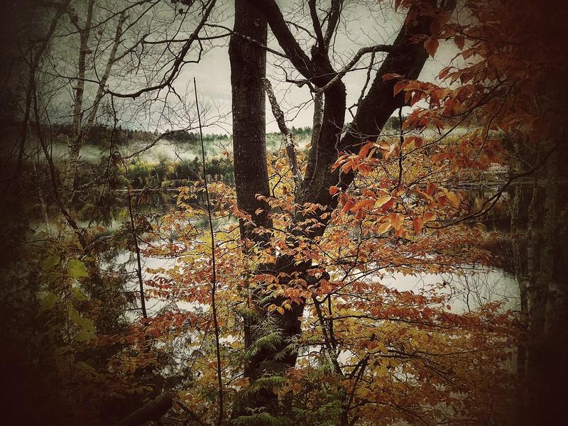 Autumn tree, lake
