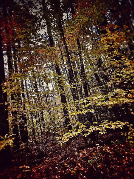Trees near Schroon