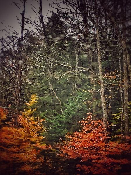 Woods near schroon