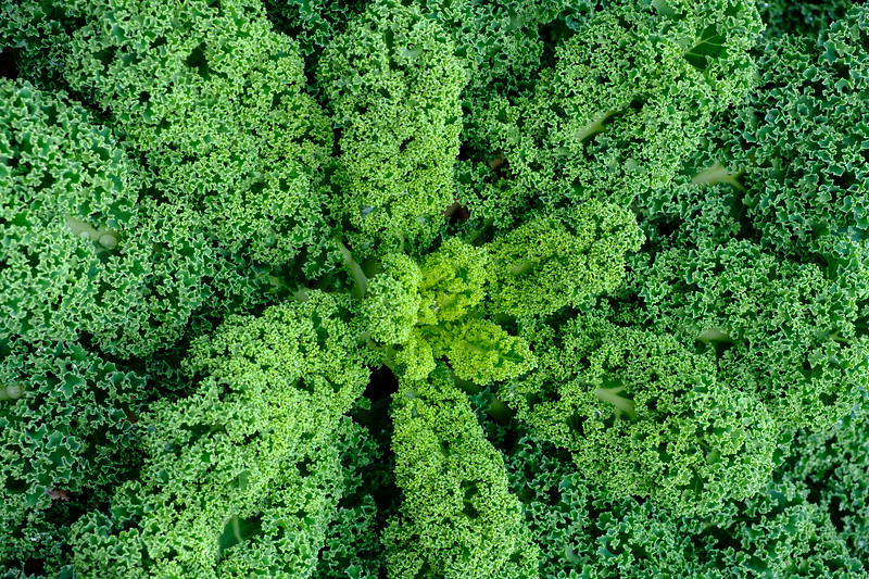 Kale, Mount Stuart Kitchen Garden, Isle of Bute, Scotland