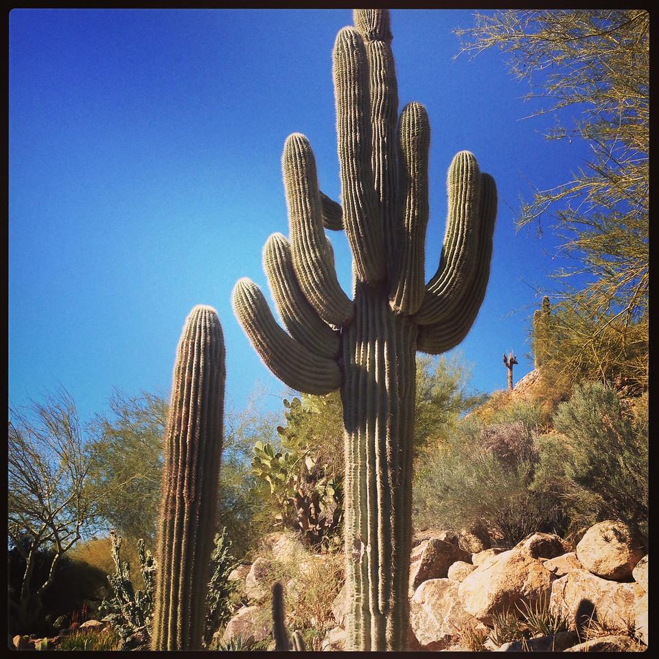 Cactus garden<br /> The Phoenician