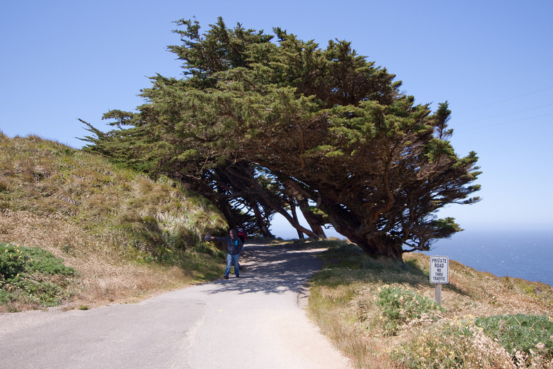 Really cool windswept cypress.