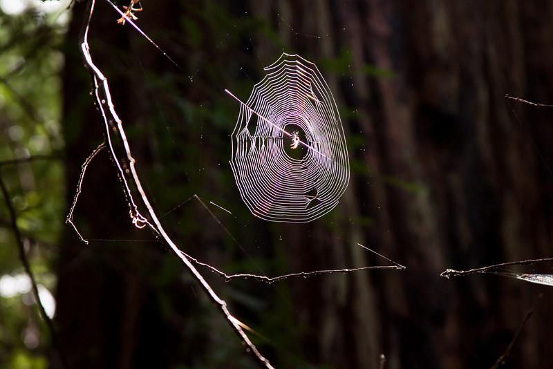 Amazing orb web