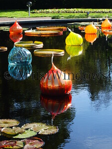 """""""Chihuly Reflections""""  2008 Honorable Mention Award in the Scott AFB Arts and Crafts Art Show. Category - Photography.   2009 Jury Selected for Air Force Online Gallery.    2009 Awarded an Air Force Web Medallion."""