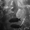 Kelp Forrest 2